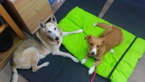 terapijski psi Lili i Sun